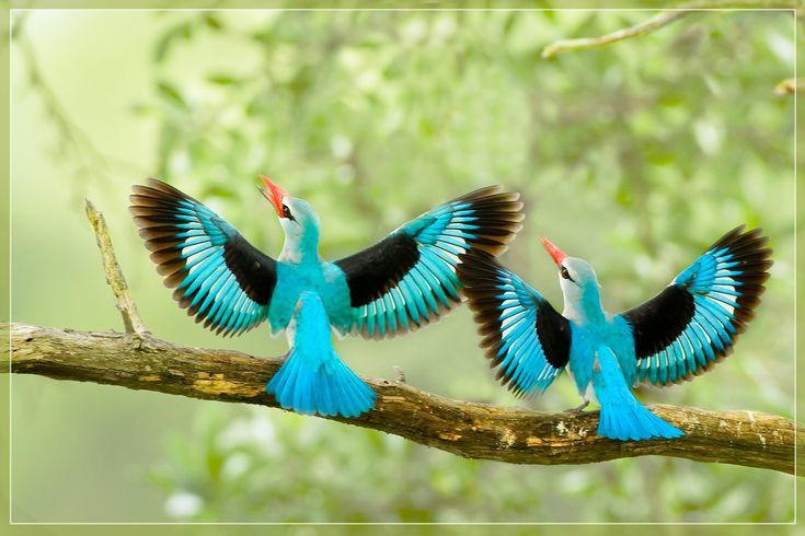 Ratho Birding